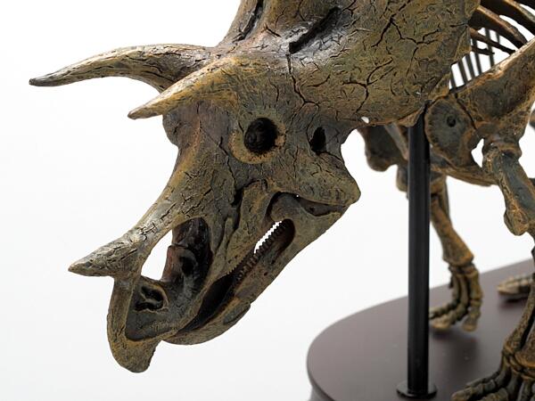 トリケラトプスの画像 p1_27